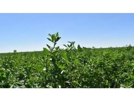 Oportunidad Para Invertir Campo Agrícola En Guatrache