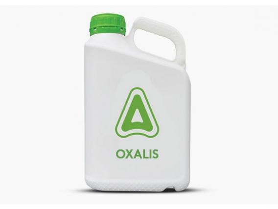 Herbicida Oxalis 48 SC® Flumioxazin - Adama