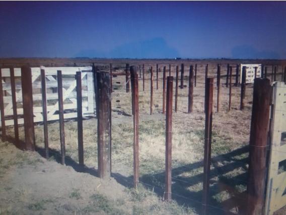 Campo de 237 has en Angélica, Santa Fe.