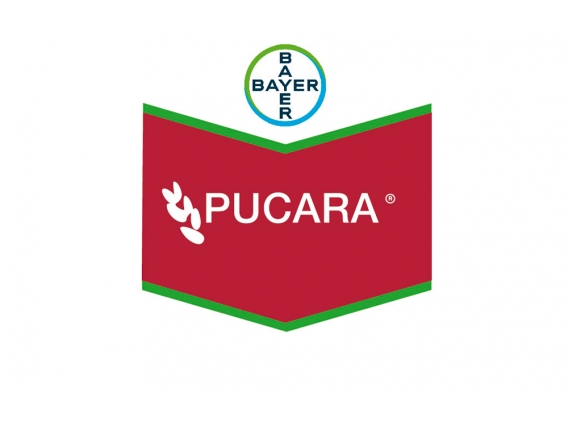 Fungicida Curasemillas Bayer Pucará®