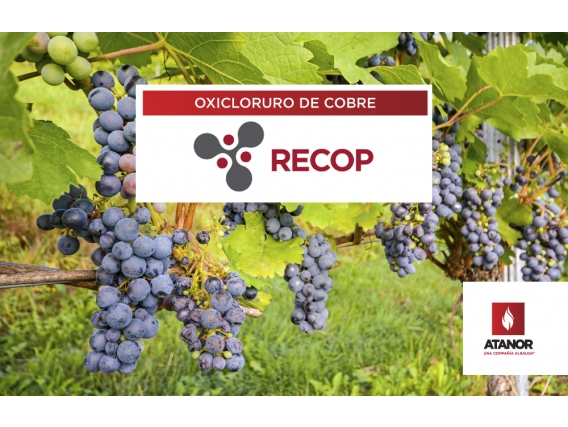 Fungicida Recop Oxicloruro de cobre - Atanor