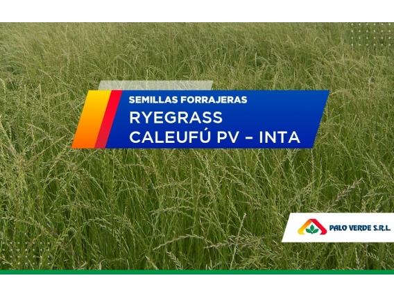 Ryegrass Caleufú PV Inta