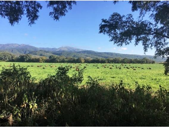Salta 7.957 Ha, Campo Agrícola-Ganadero Con Casco.