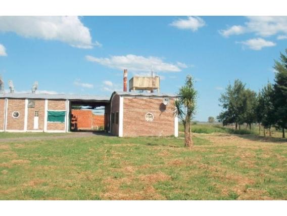 Campo En Venta. Brandsen. Bs. Aires. 128 Has. Mixto