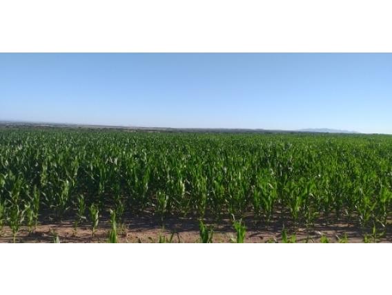 Campo De 451 Has En Alsogaray, San Luis