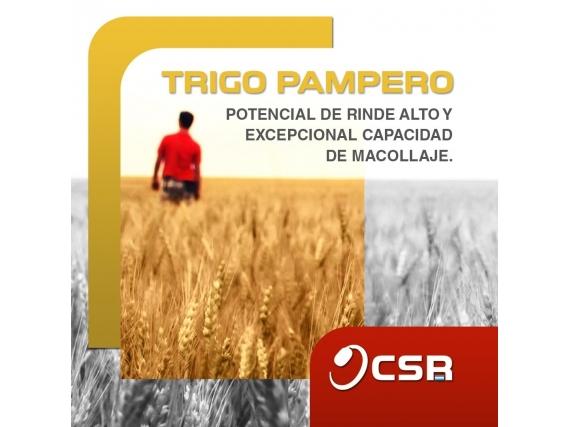 Semilla de Trigo Santa Rosa Pampero