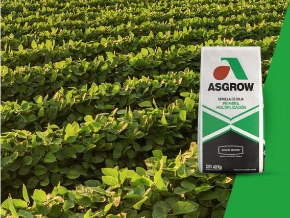 Soja AW 3920 IPRO Asgrow - NUEVO