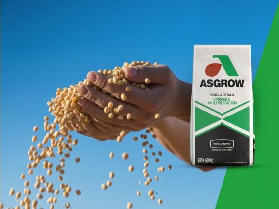Soja AW 4320 IPRO Asgrow - NUEVO