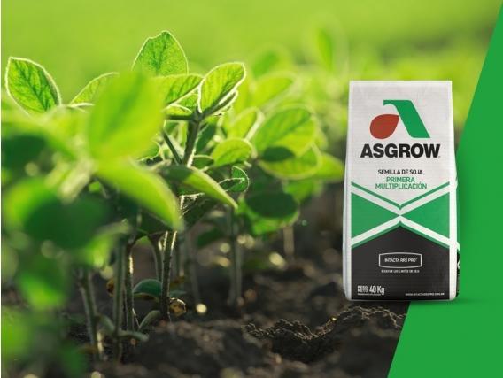 Soja AW 4610 IPRO Asgrow - NUEVO
