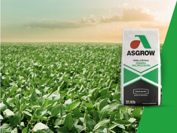 Soja AW 5920 IPRO Asgrow - NUEVO