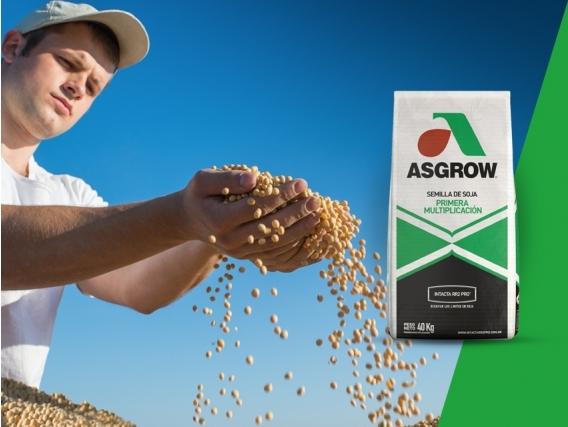 Soja AW 6320 IPRO Asgrow - NUEVO