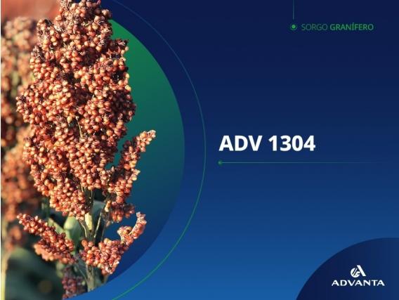 Sorgo ADV 1304