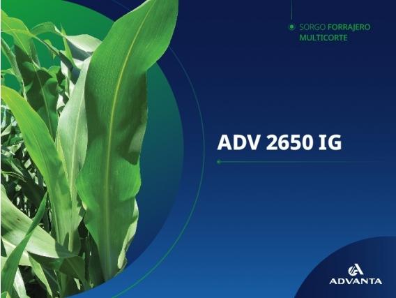 Sorgo ADV 2650 IG