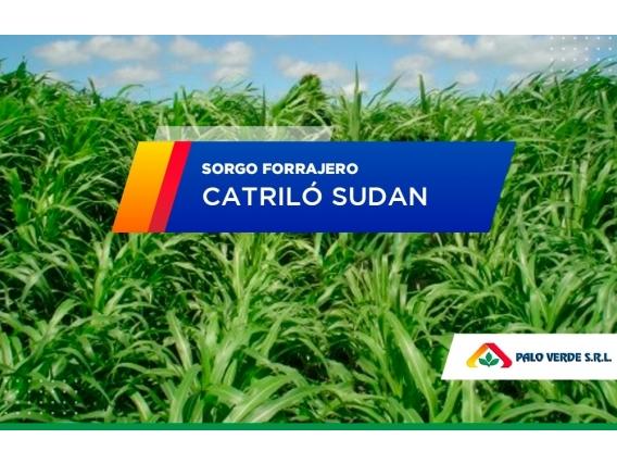 Sorgo Forrajero Catriló Sudan
