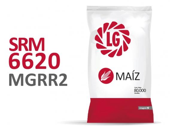 Maíz SRM 6620 MGRR2