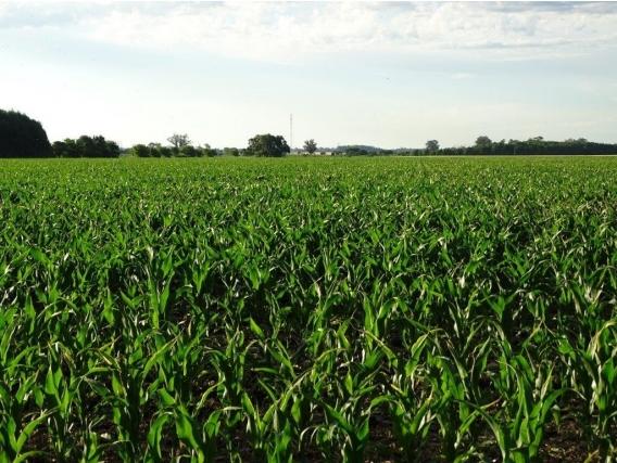 Ba3327 Tandil 120 Has. Venta Papero Agricola