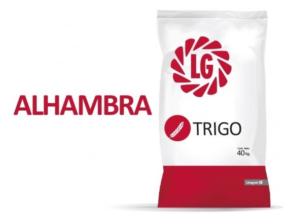 Trigo LG Alhambra