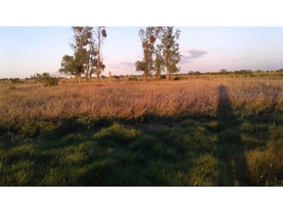 Campo de 137 has en Providencia, Santa Fe.