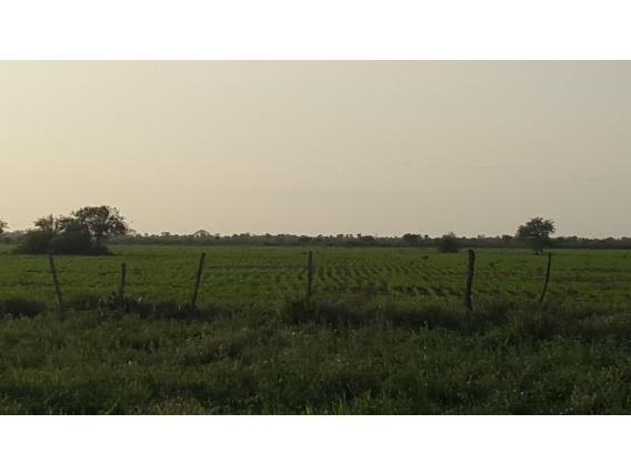 Campo de 825 has en Ceres, Santa Fe.