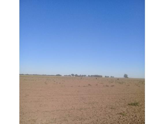Campo de 103 has en Arata, La Pampa.