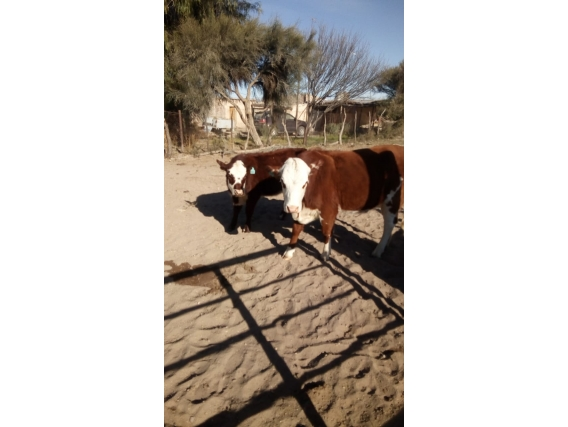 Venta campo de 1000 has en Las Catitas, Mendoza