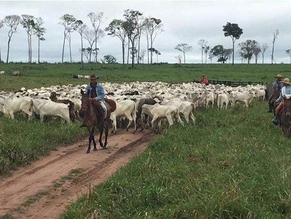 Vta 45.000 Has Tranquera Cerrada Aripuana Mato Grosso