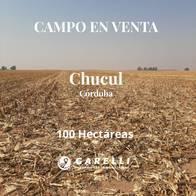 Campo De 100Has. En Chucul, Córdoba