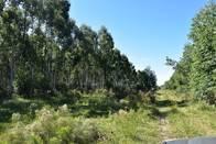 108 Has De Forestacion - Federacion - Entre Rios