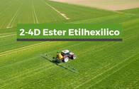 Herbicida 2-4D Ester Etilhexilico