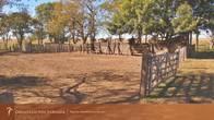 250 Ha. Gualeguay - Entre Ríos - Ref-102