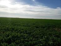 250 Has. Agrícolas En Almada - Entre Ríos