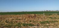 30 Ha Agricolas Estacion Clucellas