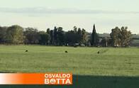 320 Has Agrícolas Riglos La Pampa Us 1800/ha