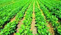 340 Ha Agrícolas, Suelo 1, En Marcos Juarez.