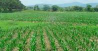 50 Ha Agricolas Con Monte Pintoresco