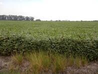 50 Has Agrícolas Exclusivas Arroyo Aguiar S/rp2 Asfalt.