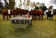 Comederos para ganaderia La Aguada Gualtieri