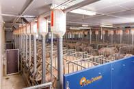 Equipo De Alimentación Para Porcinos
