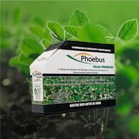 Inoculante Phoebus Soja Premium