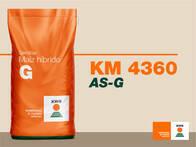Maíz KWS KM 4360 AS-G