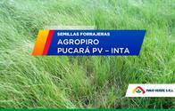 Agropiro Pucará Pv Inta
