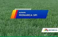 Alfalfa Monarca SPI