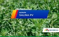 Alfalfa Salina PV