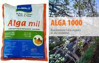 Bioestimulante Foliar Orgánico - Alga Mil
