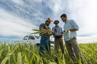 Asesoramiento Agrícola - Monitoreo De Cultivos