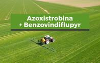 Fungicida Azoxistrobina +Benzovindiflupyr
