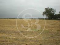 Campo Agrícola Sobre Ruta Nacional Nro 8