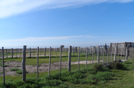 Campo De 1000 Has En Fortín Inca, Santiago Del Estero