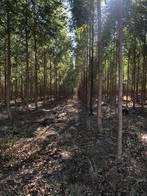 Campo Con Forestación De 220 Has En Bompland, Corrientes