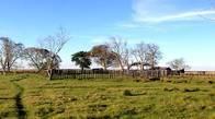 Campo En Venta En Ituzaingó. 1600 Has.